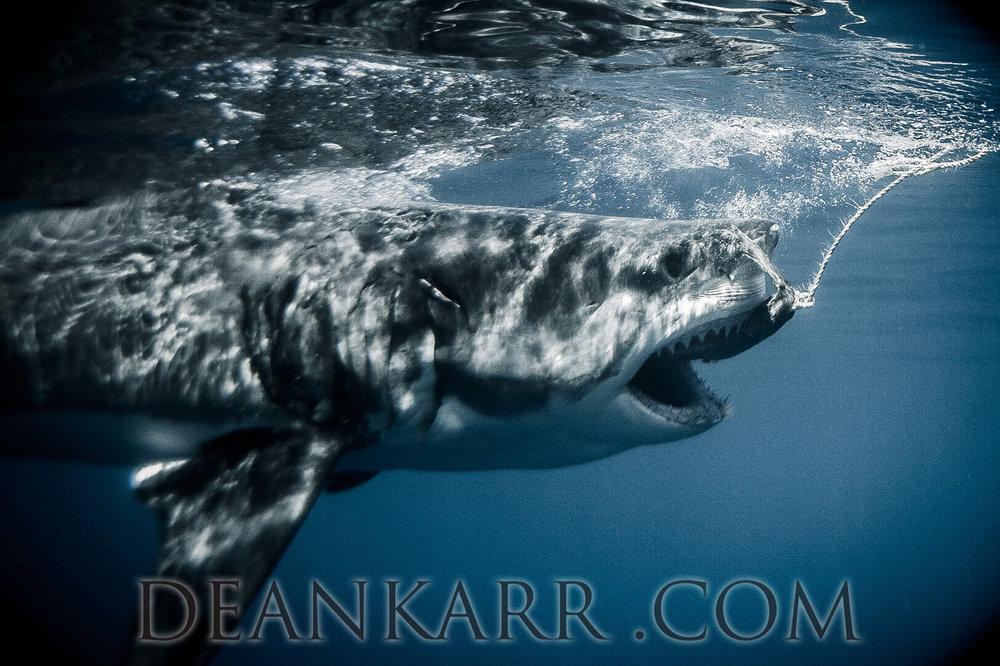 SHARKS 2016-1619.jpg