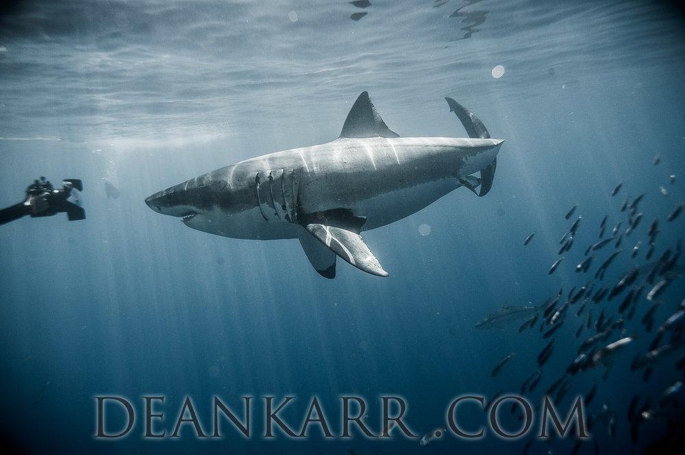 SHARKS 2016-1665.jpg