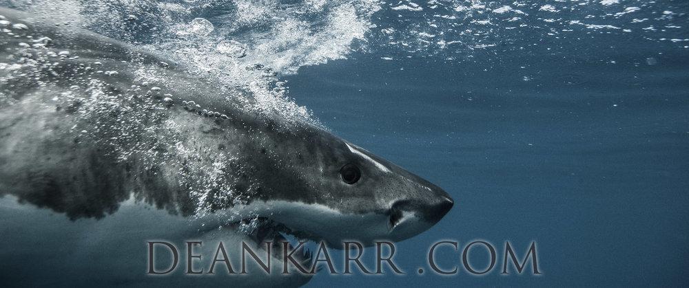SHARKS 2016-1754.jpg