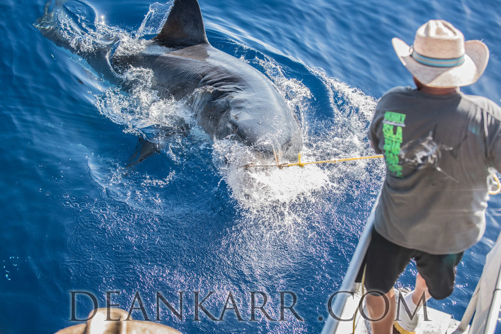 SHARKS 2016-2156.jpg