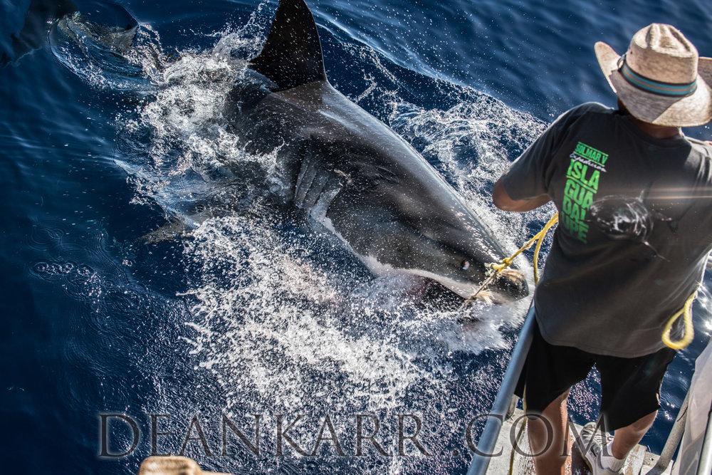SHARKS 2016-2157.jpg