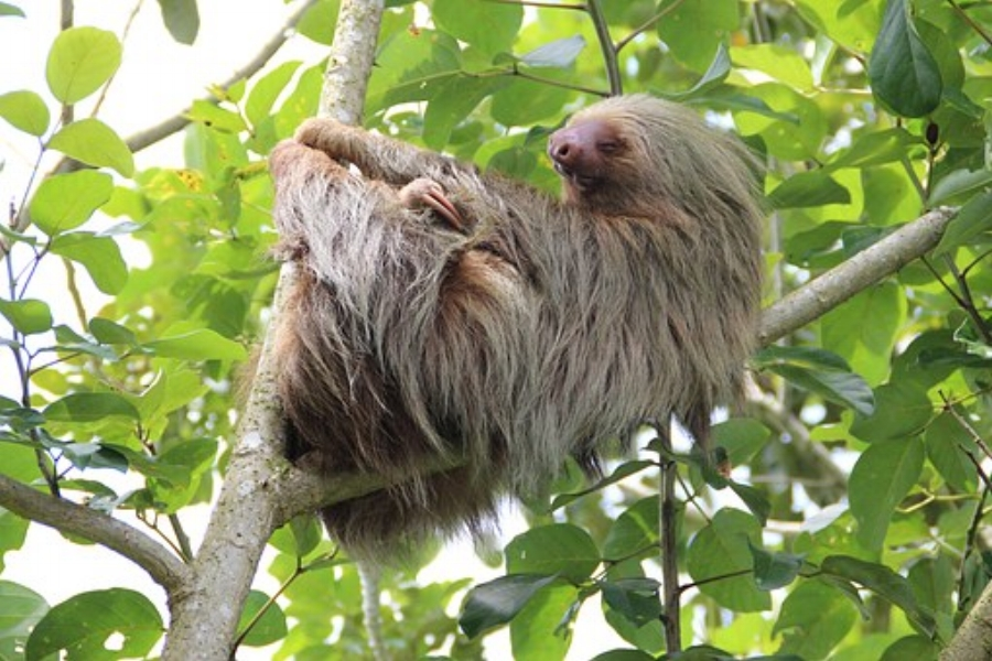 sloth-1041855__340.jpg