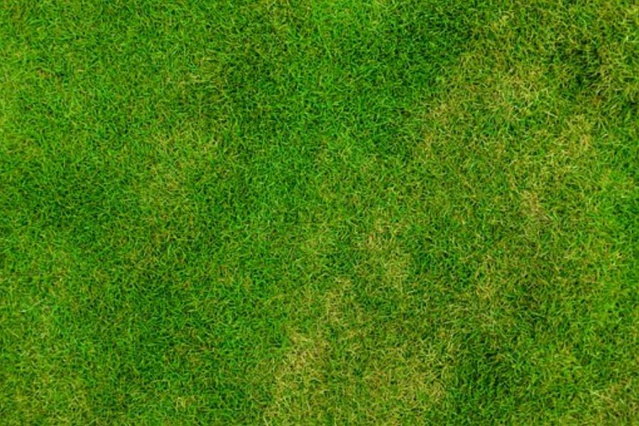 lawn grass care