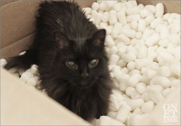 P'heper's first run-in with packing peanuts. Gotta get used to it. ^_^ V