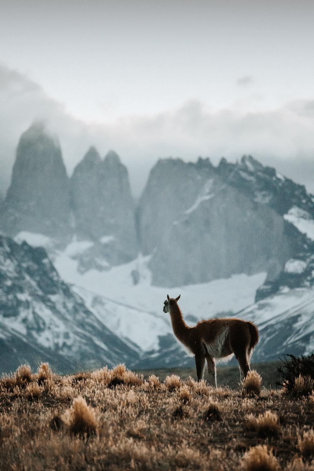 Torres del Paine. 150mm lens.