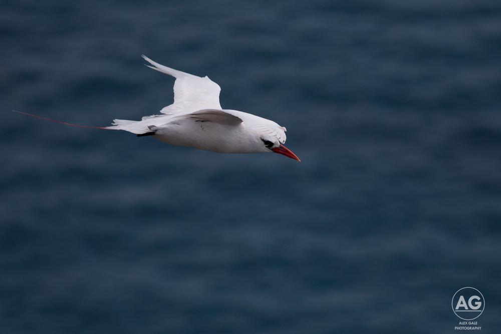 Lord Howe Island-11.jpg