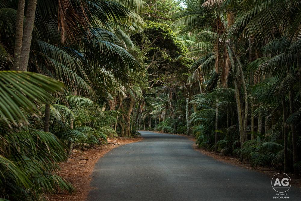 Lord Howe Island-9.jpg