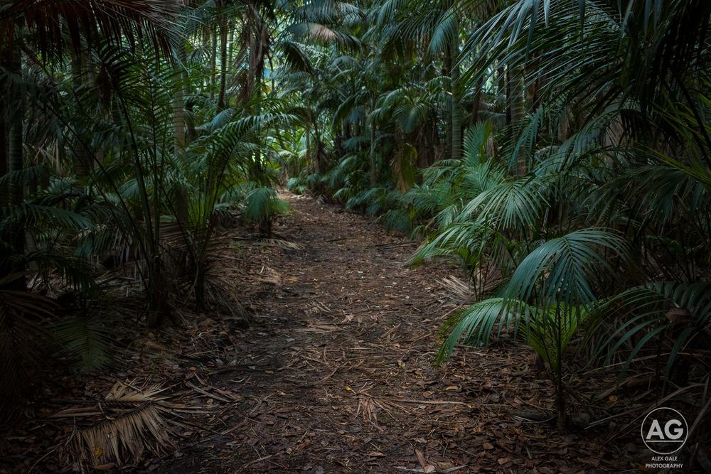 Lord Howe Island-25.jpg