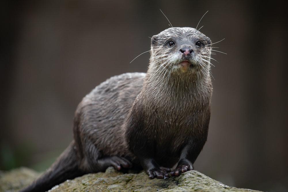 Otter-2.jpg