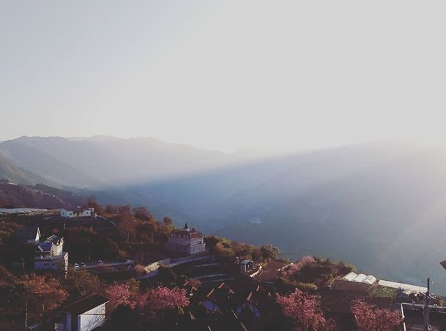 Sunrise in Qingjing mountain, 2500m above sea level #Taiwan #tea #highmountainoolong