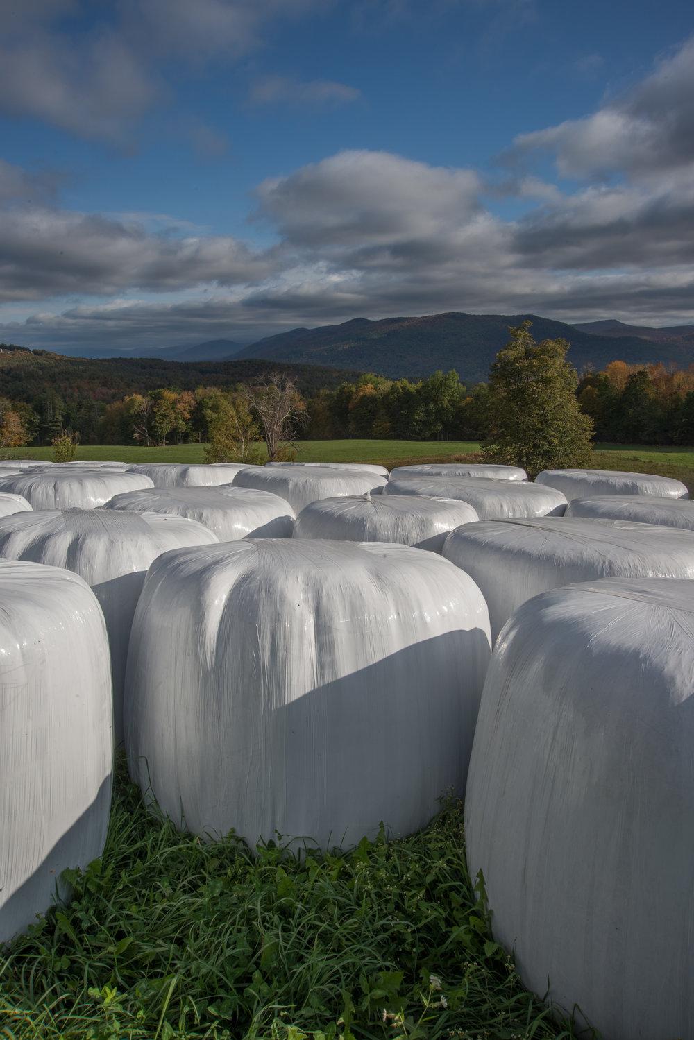 Bales' of Hay
