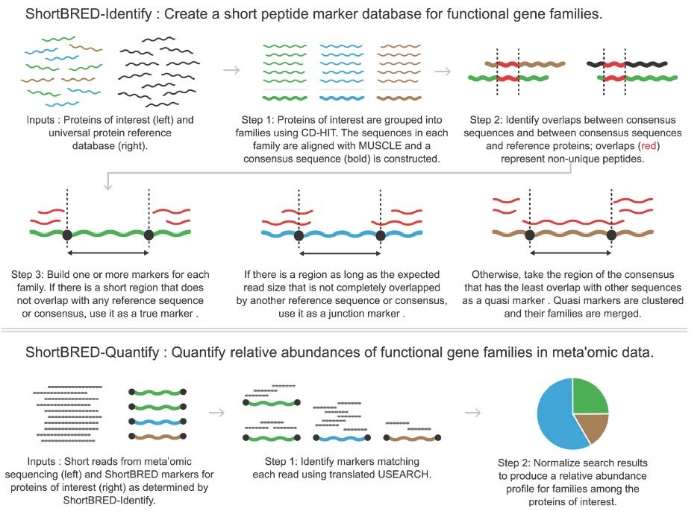 High-specificity targeted functional profiling in microbial communities with ShortBRED. Kaminski et al. PLOS Computational Biology 2015