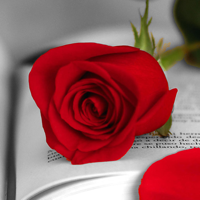 visual-sant-jordi-roses-books