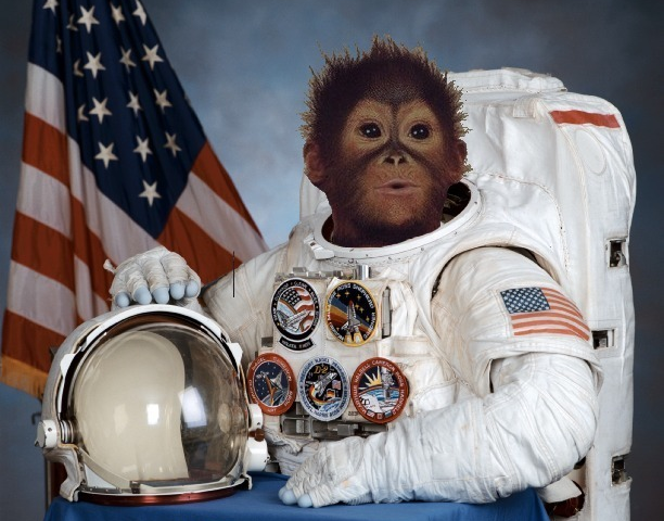 space suit astronaught monkey