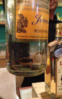 Screw the worm. Slam a scorpion!