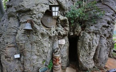 Baobab bar door