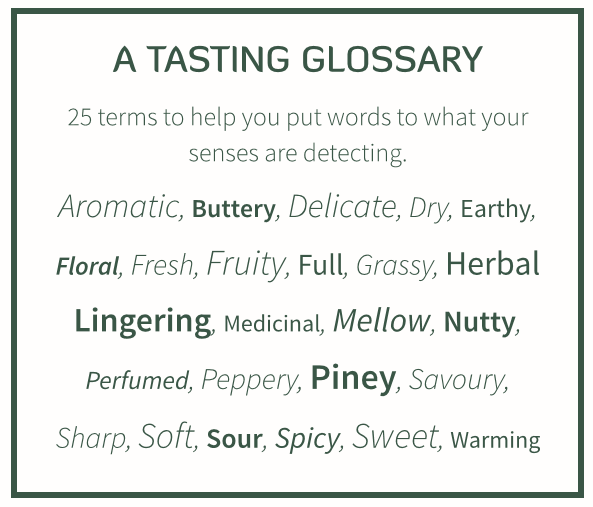 Gin and tonic pro tasting glossary