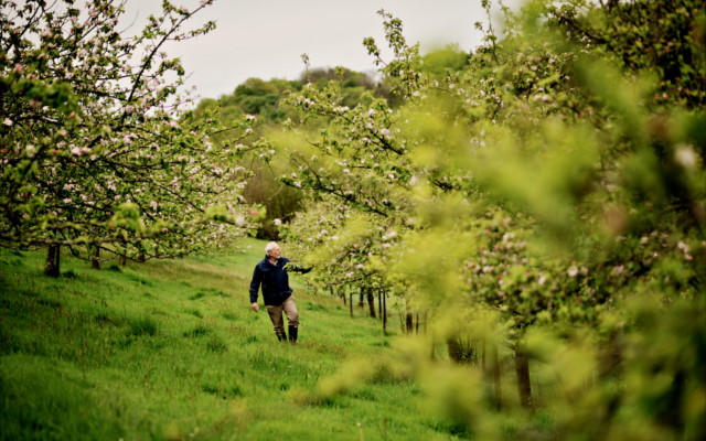 Andy tends to his orchard.