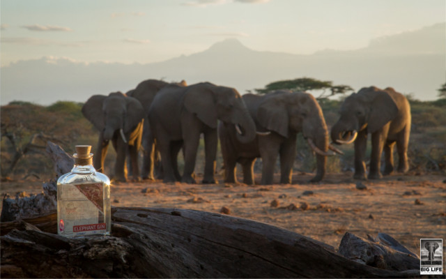 Elephant gin with elephants