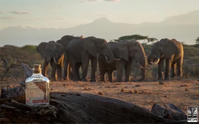 Elephant gin with elephants