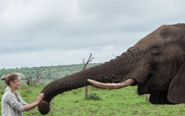 Elephant trunk touching woman