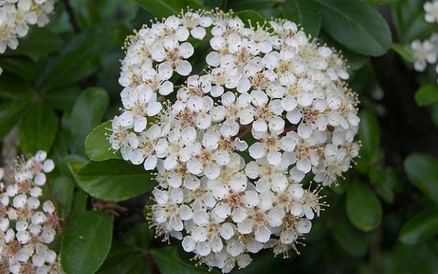 Image via Flower Web