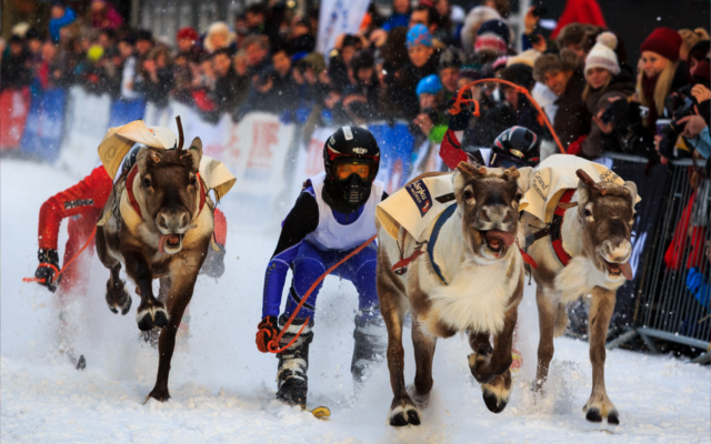 Reindeer Racing in the arctic circle