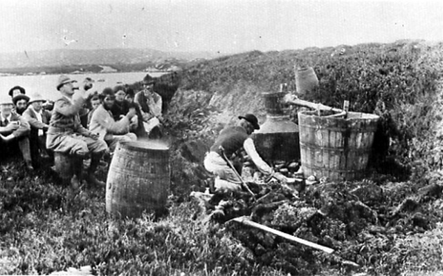 Black and white photo of irish workers producing moonshine poitin