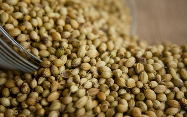 Coriander seeds botanicals