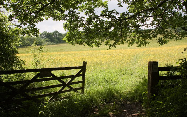 wildflower meadows summers day gate field