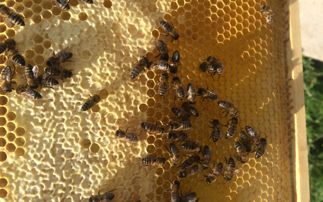 Bees on honeycomb bee keeping