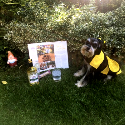 gin ginstagram photo competition dog bee costume