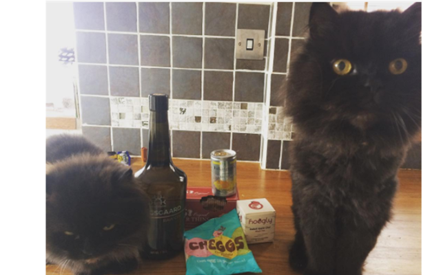 Two black cats with the Konsgaard Gin
