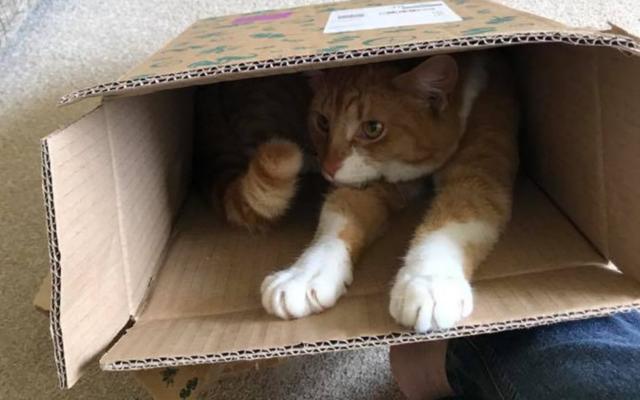 cat in craft gin club box