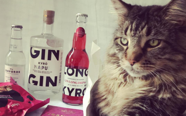 Big Tabby cat with the Kyro Napue gin box of the month