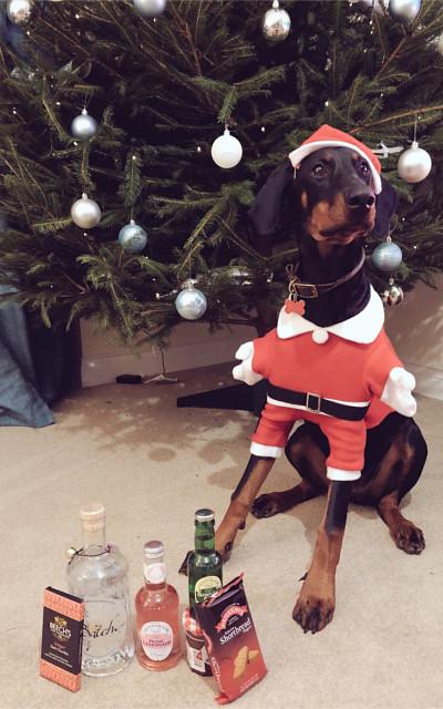December Batch Gin Runner-Up