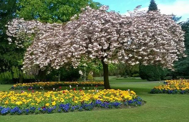 cannonhill park Birmingham.png