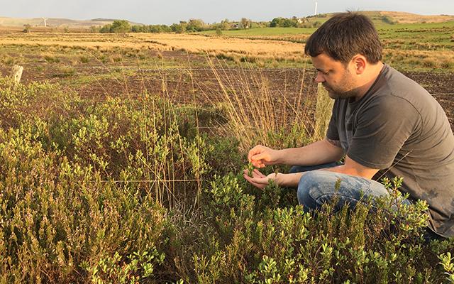 Joe McGirr picking botanicals for Boatyard gin