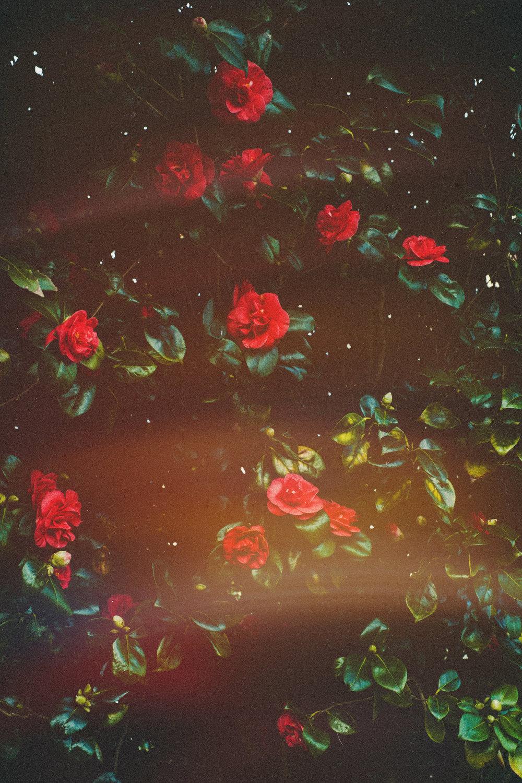 3.3.2019 flowers (5).jpg