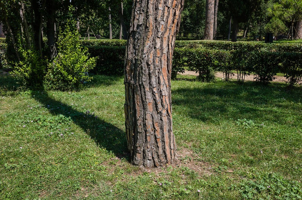 Fingerprints in the Bark - August 2014