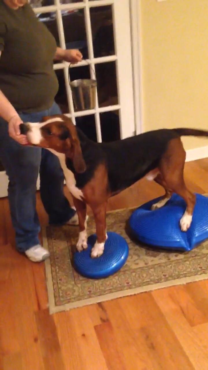 Rolo on his balance discs