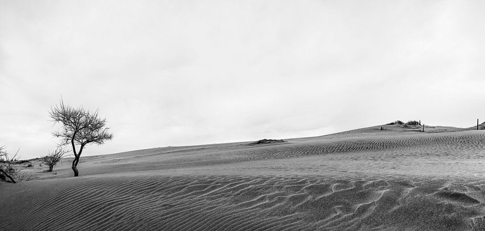 Jockey's Ridge, Nags Head, NC. 2018.