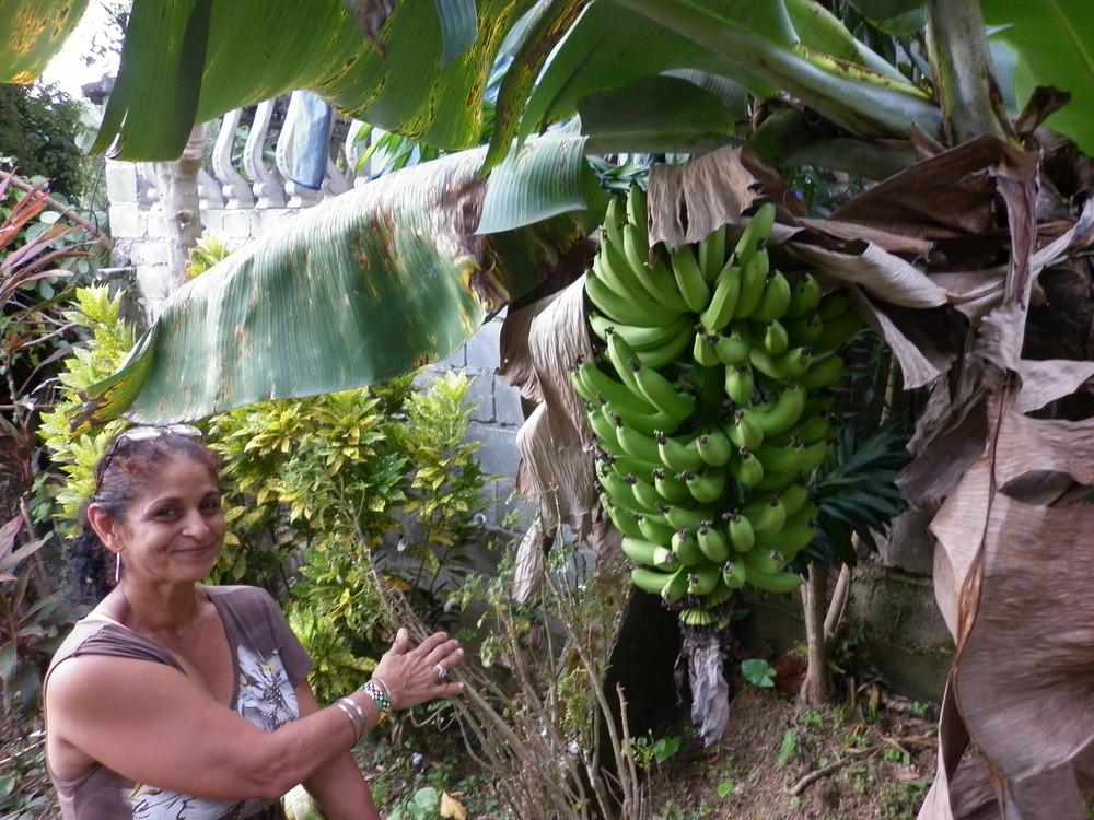 """Marlene qui me dit : """"Savais-tu que les bananes, ça pousse de même?""""."""