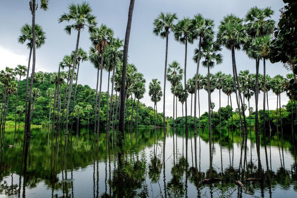 Rare moment de paix en bordure de la route, auprès d'un lac de palmiers.