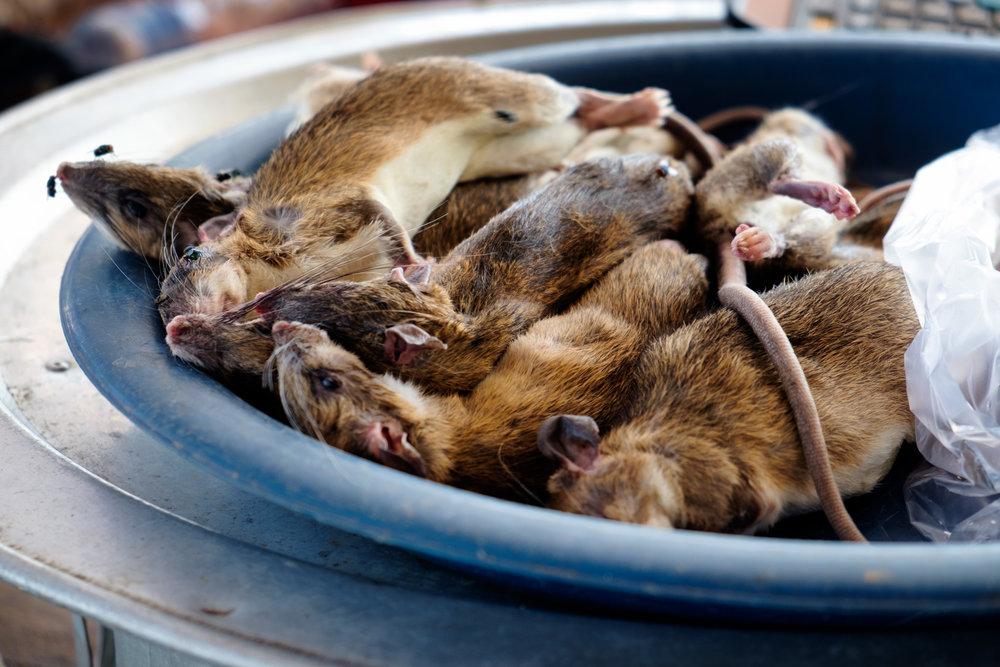 On peut acheter des rats au marché.