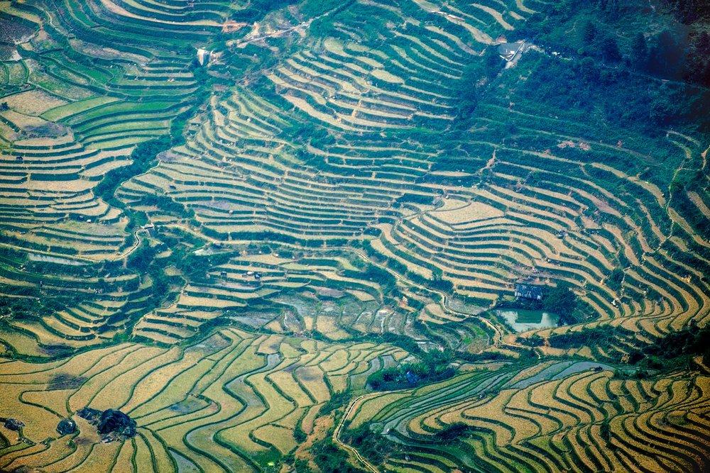 Les fameuses terrasses de riz du nord du Vietnam.