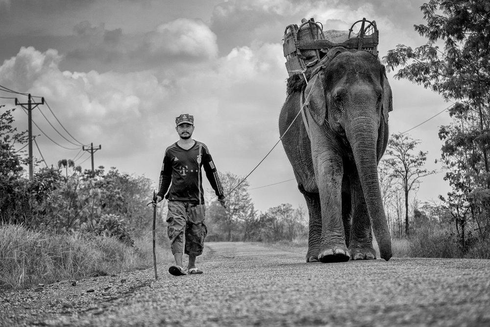 Journée normale sur la route du Cambodge : un homme promène son enfant en laisse.