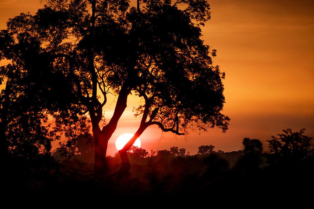 Le soleil levant donne au parc des airs de safari africain.