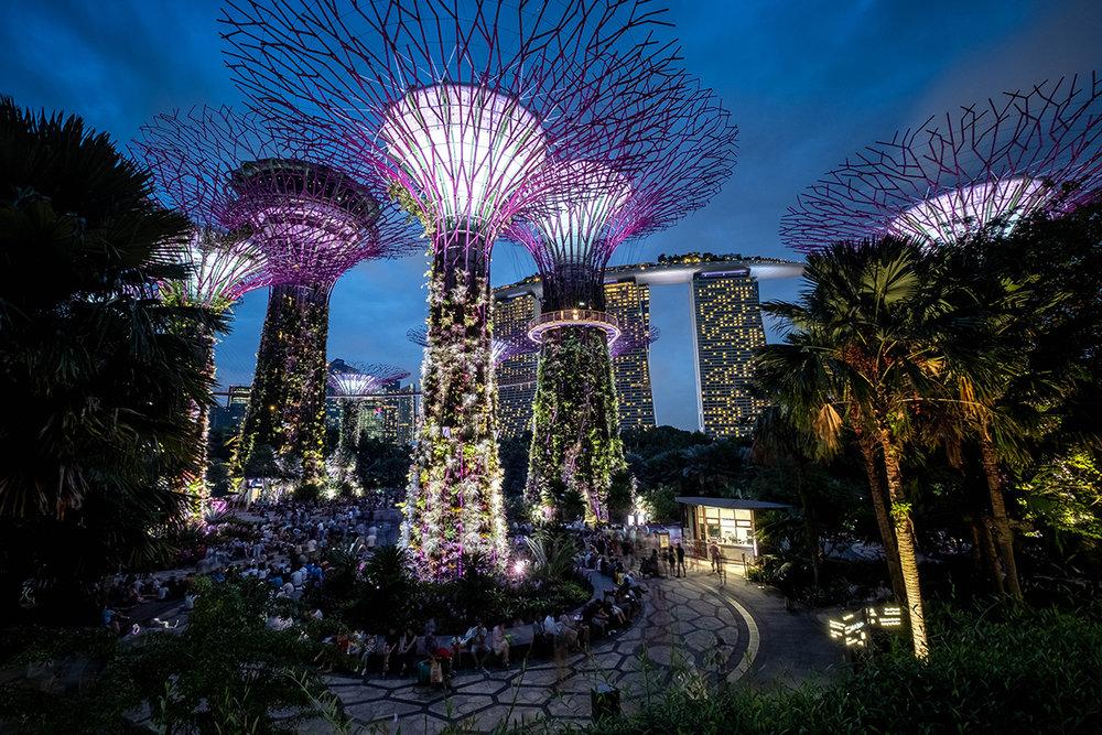 Les fameux et impressionnants palmiers « Supertree Grove », dans le Garden by the Bay.