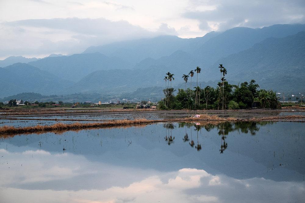 Oasis agricole au milieu de la vallée.